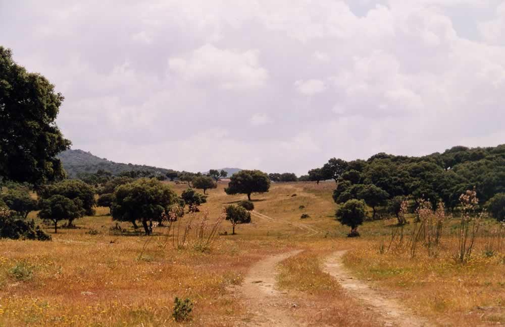 Cordel de Tres Ventas en pleno Valle de Alcudia