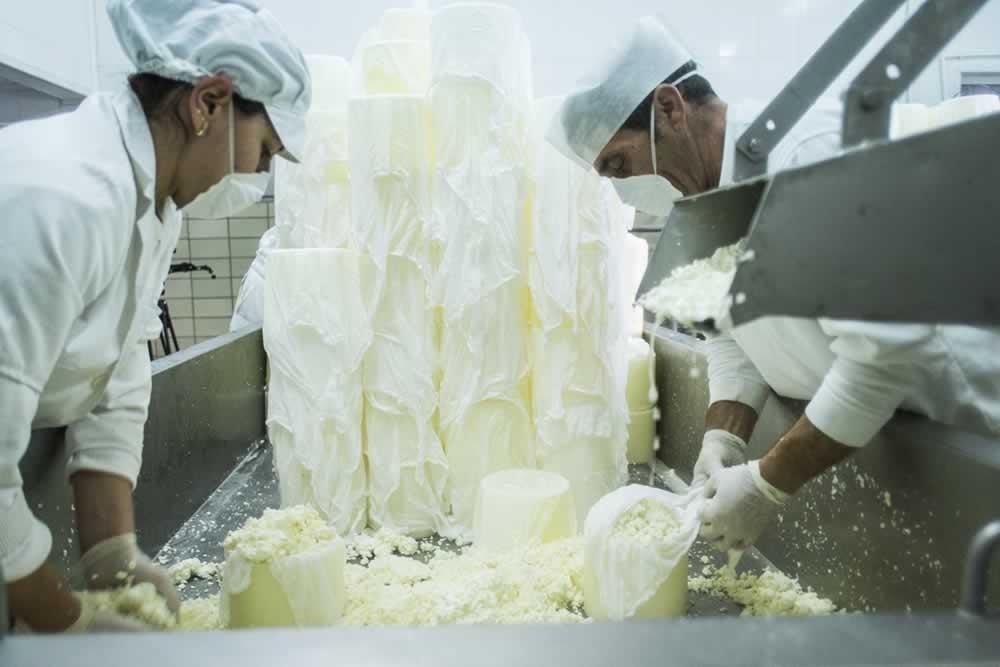 Elaboración de queso manchego