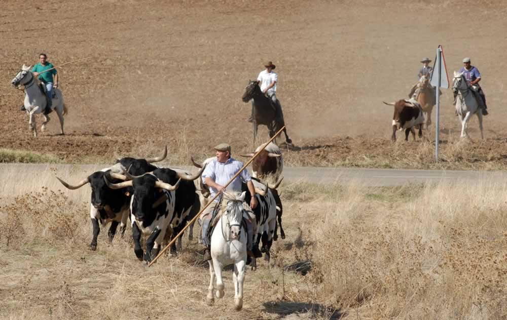 Encierro en campo en Tirteafuera
